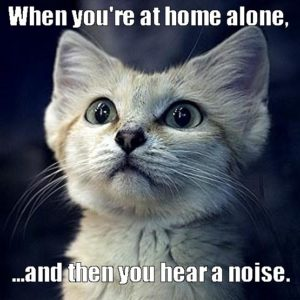 cat-funny-cat-home-alone-cat-meme-Favim.com-3349192