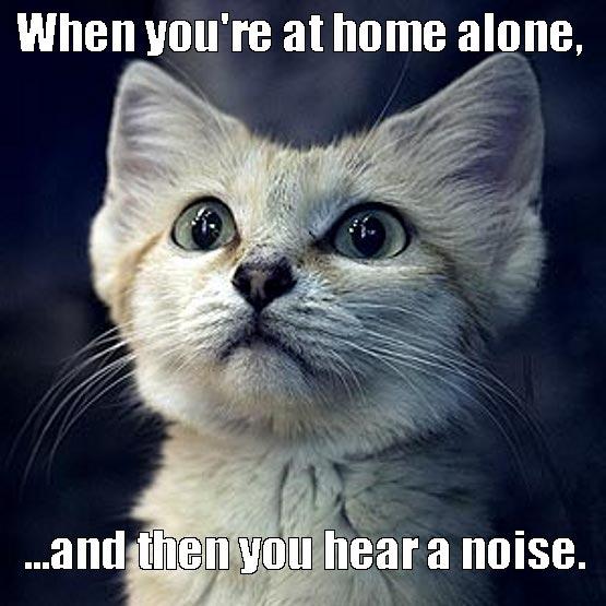 cat-funny-cat-home-alone-cat-meme-Favim.com-3349192